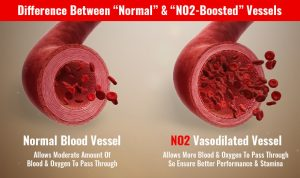 nutraoptimized no2 vasodilation